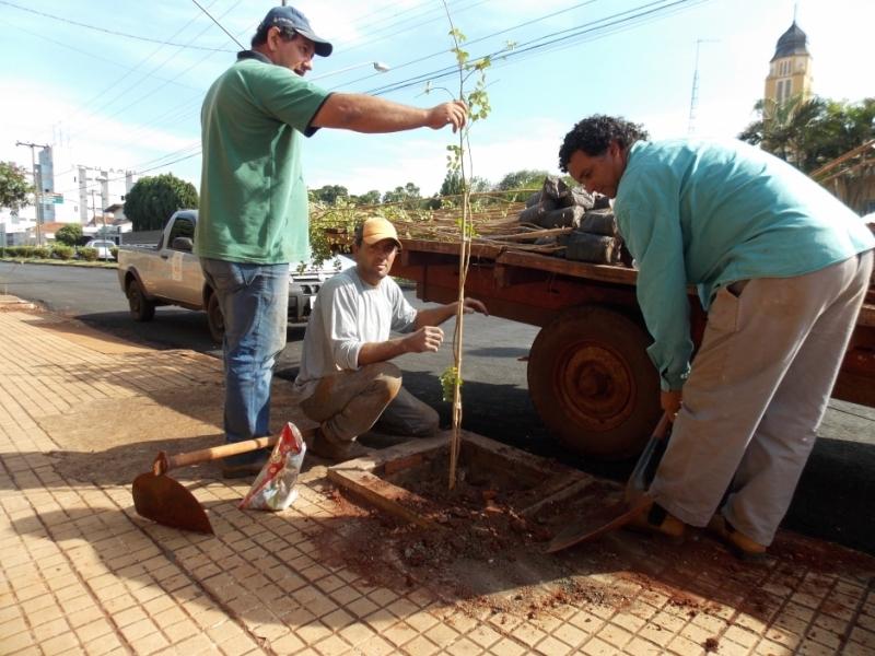 Secretaria de Meio Ambiente planta 150 mudas de Resedá na avenida Goiás.