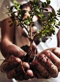 Plano Municipal de Arborização Urbana