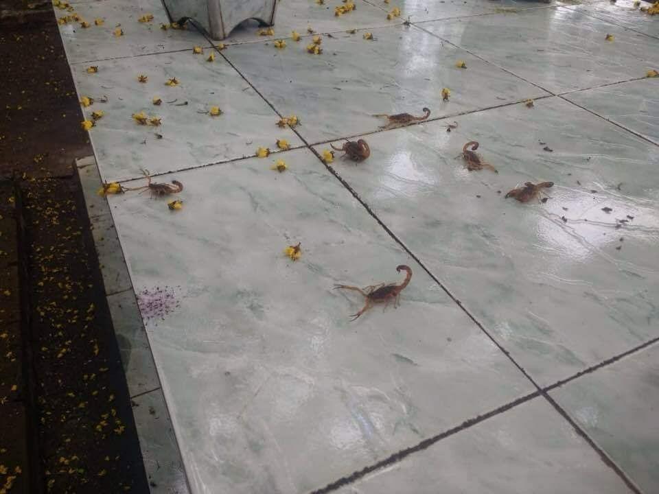Foto de escorpiões em túmulo de cemitério, que viralizou em redes socias como sendo em Andirá, é fake