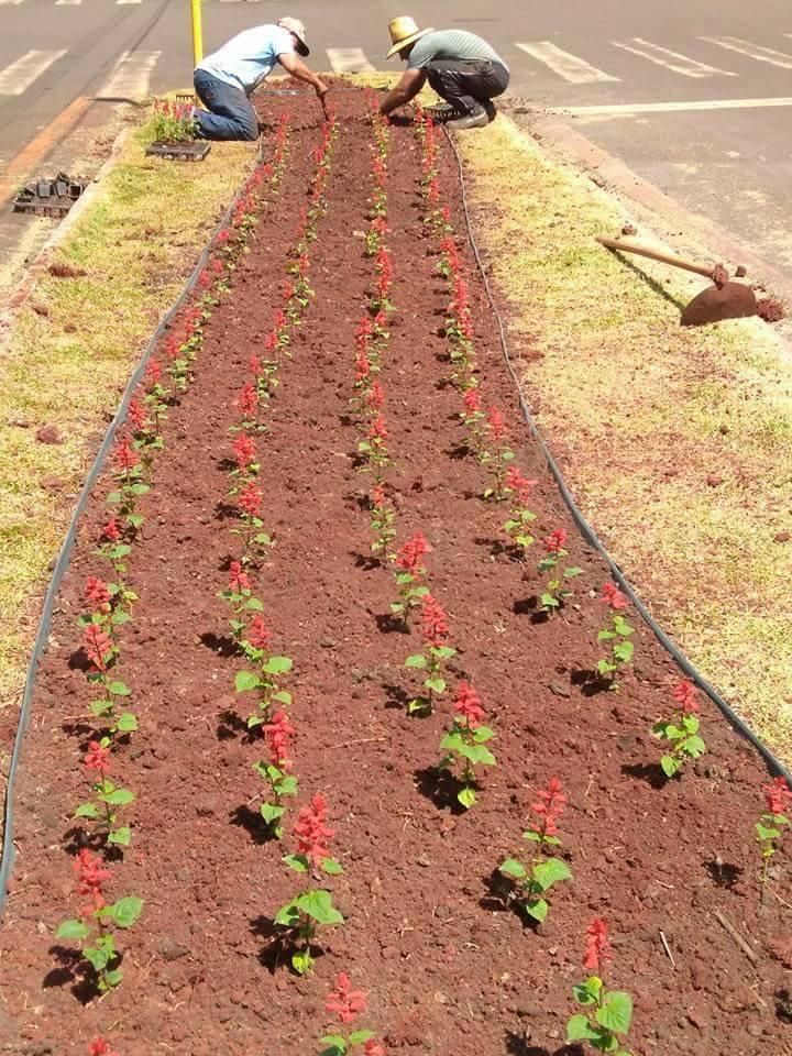 Praças e Canteiros de Andirá ganham flores para embelezar a cidade