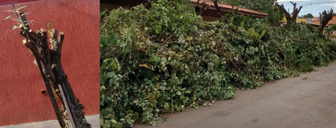 Conscientização: Prefeitura alerta população para poda irregular de árvores